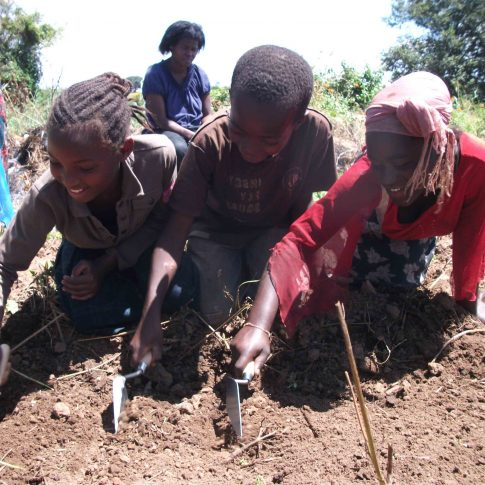 Orphans digging vegetables