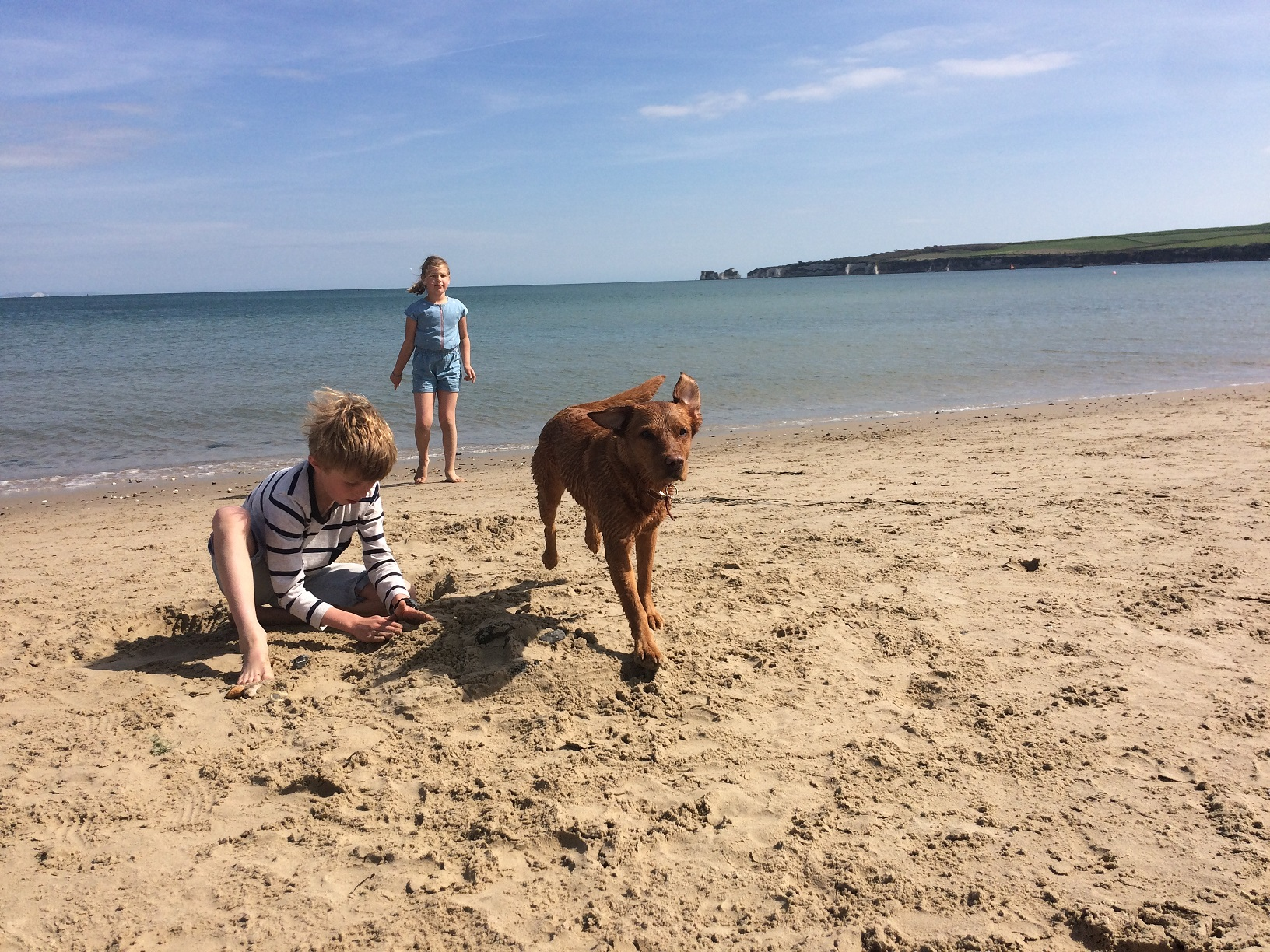 Dog on Studland Beach